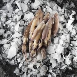 Calamari 500g